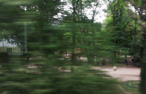 Dentro la bocca del bosco